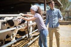 Landspar av bönder som poserar med exponeringsglas av, mjölkar på cowfarm Arkivfoton