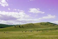 Landssidolandskap med blå himmel, moln och fältet med träd Flock av kor i en beta på grönt gräs på kullar royaltyfria foton