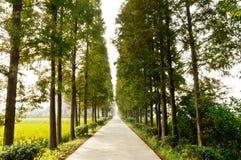 Landsskogväg Fotografering för Bildbyråer