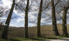 Landsträd Arkivfoto