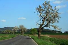 Landstraße lizenzfreies stockfoto