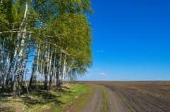 Landstraße auf einem Gebiet nahe dem Wald an einem sonnigen Tag Stockfotos