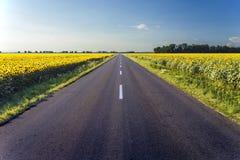 Landstraße in der Mitte des Sonnenblumenfelds Stockfotografie