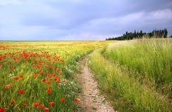 Landstraße durch Getreidefeld mit roten Mohnblumen Stockfotografie