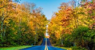Landstraße durch Herbstlaub Stockbilder