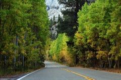Landstraße durch Wald lizenzfreie stockfotografie