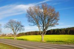 Landstraße entlang Rapsfeld Stockbilder
