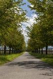 Landstraße gezeichnet mit belaubten grünen Bäumen Lizenzfreies Stockbild