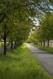 Landstraße gezeichnet mit belaubten grünen Bäumen Lizenzfreie Stockfotografie