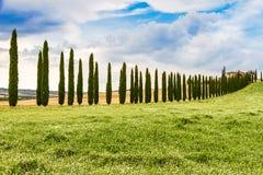 Landstraße grenzte mit Zypressen in Toskana, Italien an lizenzfreies stockfoto