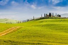 Landstraße grenzte mit Zypressen in Toskana, Italien an stockbild