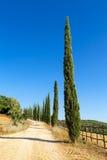 Landstraße grenzte mit Zypressen in Toskana, Italien an lizenzfreie stockfotografie