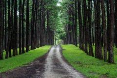 Landstraße im Kiefernwald Stockfotos