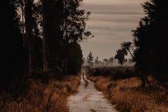 Landstraße im trockenen dunklen Holz stockfotografie