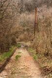 Landstraße im Wald Lizenzfreies Stockfoto