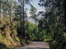 Landstraße im Wald mit Kiefern lizenzfreie stockfotografie