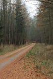 Landstraße im Wald am nebelhaften Tag Lizenzfreies Stockfoto