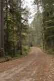 Landstraße im Wald in Nord-Wisconsin stockbild