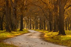 Landstraße mit Bäumen stockbild