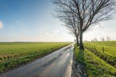 Landstraße mit blattlosen Bäumen entlang einem Graben Lizenzfreie Stockfotos