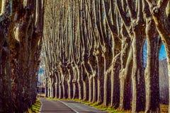 Landstraße mit hohen Bäumen auf beiden Seiten Stockbilder