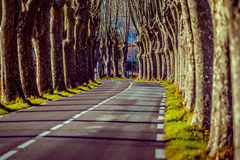 Landstraße mit hohen Bäumen auf beiden Seiten Stockfoto