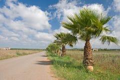 Landstraße mit Palmen stockfoto
