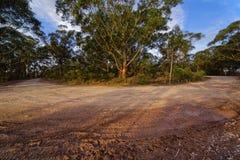 Landstraße mit Schlammbahnen im Eukalyptusgebirgswald, blau Lizenzfreie Stockbilder