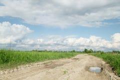 Landstraße und Felder mit Löwenzahn am warmen Sommertag Lizenzfreies Stockbild