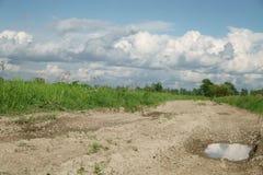 Landstraße und Felder mit Löwenzahn am warmen Sommertag Stockfotografie