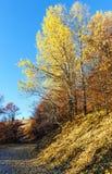 Landstraße und goldener Herbst im Berg Stockbild