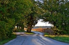 Landstraßen-Spalten für Baum stockfoto