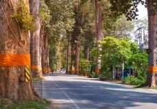Landstraßentunnel von grünen Bäumen auf Sonnenlicht mit Schatten auf Straße in Stadt Amphoe Saraphi Chiang Mai von Thailand lizenzfreie stockbilder
