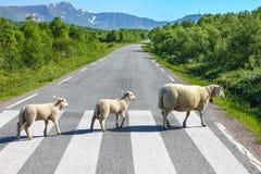 Landstraßenüberquerung Stockbild