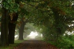 Landsväg. Royaltyfri Bild