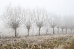 Landsväg bland pilar i morgonmist Arkivfoton
