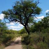 Landsväg i Argentina Arkivfoton