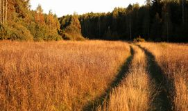 Landsväg i ett trä Royaltyfria Foton