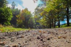 Landsväg i gräsplan med solsken Fotografering för Bildbyråer