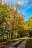 Landsväg i gräsplan med solsken Arkivfoton