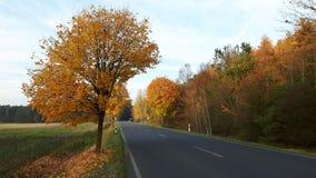 Landsväg i höst royaltyfria foton