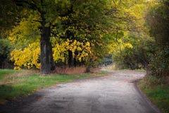 Landsväg i hösten bland de ljusa träden Arkivfoton