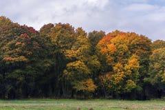 Landsväg i hösten bland de ljusa träden Royaltyfri Foto