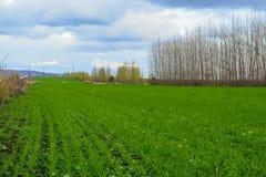 Landsväg i höstfält Himmel med moln i bakgrund Grönt gräs i äng och kala träd längs rutten Fotografering för Bildbyråer