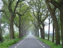 Landsväg i Nederländerna Fotografering för Bildbyråer