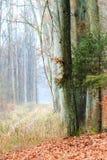 Landsväg i skogen på dimmig dag Arkivfoton