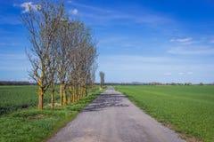Landsväg i Slovakien Royaltyfria Foton