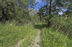 Landsväg i träna Arkivfoton