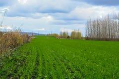 Landsväg i vårfält Himmel med moln i bakgrund Grönt gräs i äng och kala träd längs rutten Arkivfoton