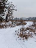 Landsväg i vinter royaltyfri bild